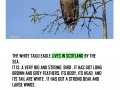 ISLE_OF_MULL_AND_WHITE_TAILED_EAGLE_page_0011