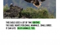 ISLE_OF_MULL_AND_WHITE_TAILED_EAGLE_page_0012