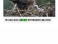 ISLE_OF_MULL_AND_WHITE_TAILED_EAGLE_page_0013