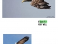 ISLE_OF_MULL_AND_WHITE_TAILED_EAGLE_page_0014
